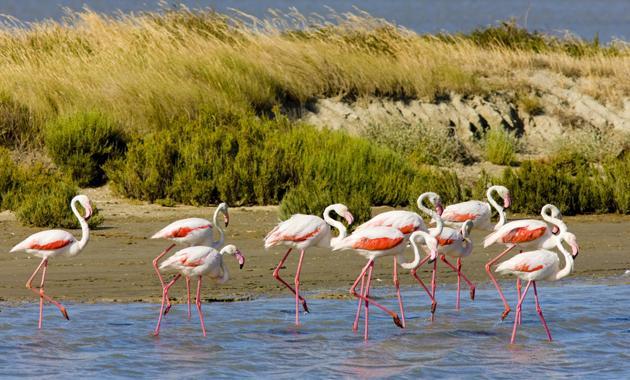 Flock of flamingos