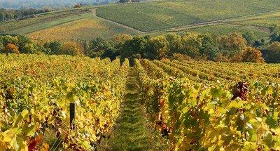 Sancerre's famous vineyards
