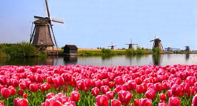 Moulin dans un champ de tulipes