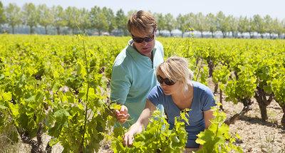 Dégustation de vins en Bourgogne