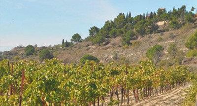 Vignobles baignés par le soleil en Bourgogne
