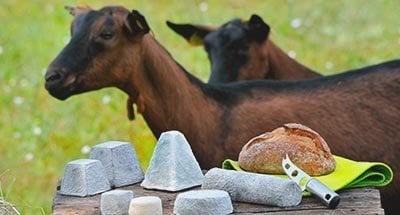 Chèvres et fromage