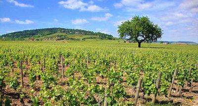 Vignobles en Bourgogne