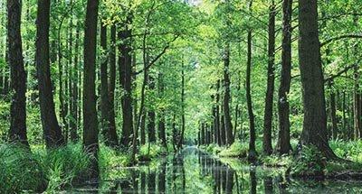Spreewald forest in Bradenburg