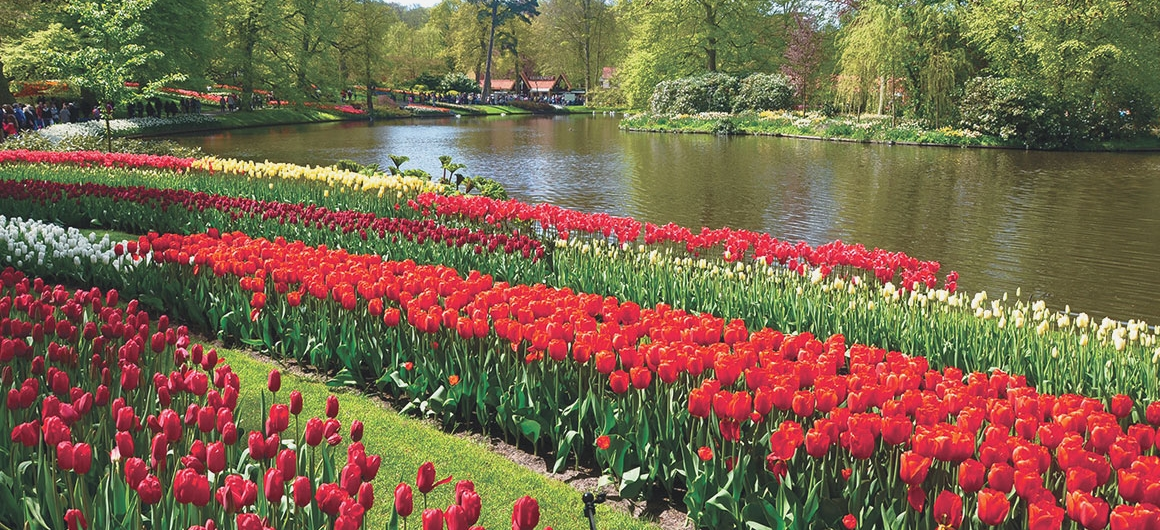 Tulips of Keukenhof, Lisse, Netherlands