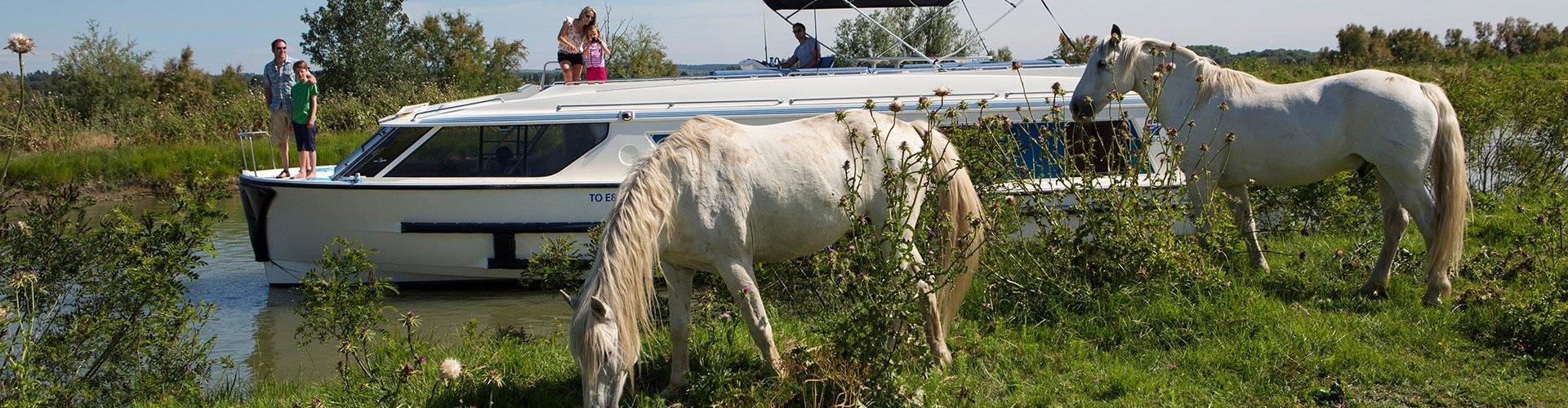 Horse riding cruises